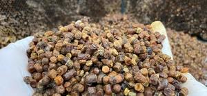 Afyonkarahisar Taşoluk'ta vitamin deposu 'arı ekmeği' üretimi başladı Daha çok Arap ülkelerine ihraç ediliyor