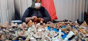 Havalar kurak gidince mantar fiyatları yüzde 100 zamlandı Durumdan toplayıcılar da tüketiciler de memnun değil