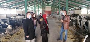 Kaymakam Kurt'un besihane ve süt üretim tesisini ziyareti