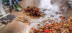 Cumayeri'nde sonbahar temizliği