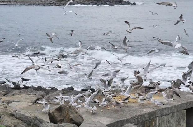 Sokağa çıkma yasağında kuşları yalnız bırakmadılar
