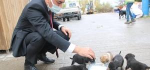 Hayvan barınağına göndermek istediği köpekleri belediye önüne bıraktı Başkan Kaplan, 5 minik yavruyu elleriyle besledi