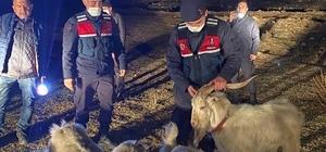 Ağıldan kaçan küçükbaşları jandarma buldu Piyasa değeri 50 bin lira olan kayıp 65 küçükbaş hayvan ağıldan yaklaşık 10 kilometre uzaklıkta bulunarak sahibine teslim edildi