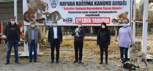 Koçarlı'ya hayvan hakları ile ilgili bilgilendirme pankartları asıldı