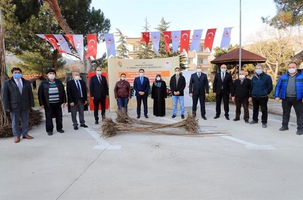 """Amasya çiftçisine kiraz fidanı desteği Amasya Valisi Mustafa Masatlı: """"Meyvecilikte çıtayı daha yukarılara taşımak için çalışmalar yapmaktayız"""""""