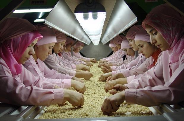 Düzce'den Avrupa'ya bin 63 ton iç fındık ihraç edildi