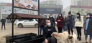 Bismil Belediyesi sokak hayvanlarını yalnız bırakmadı