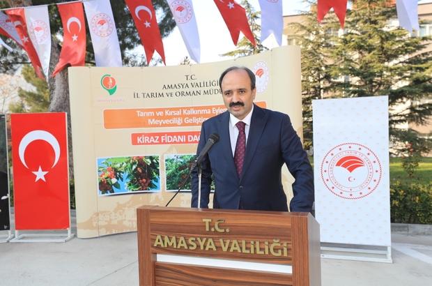 """Amasya'da hedef kiraz ihracatını artırmak Amasya İl Tarım ve Orman Müdürü Hayrullah Göktekin: """"Projeler yaparak ihracata uygun kiraz çeşitlerinin oranını artırmayı hedeflemekteyiz"""""""