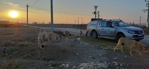Hafta sonu yasağında sokak hayvanları unutulmadı DKMP ekipleri kırsalda yaşayan hayvanları besliyor