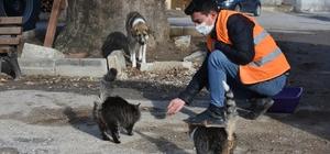 Kısıtlamada sokak hayvanları aç kalmadı