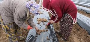 Bismil Belediyesi kadınlara yönelik iş ortamı oluşturmak adına 'Çilek Okulu' açtı