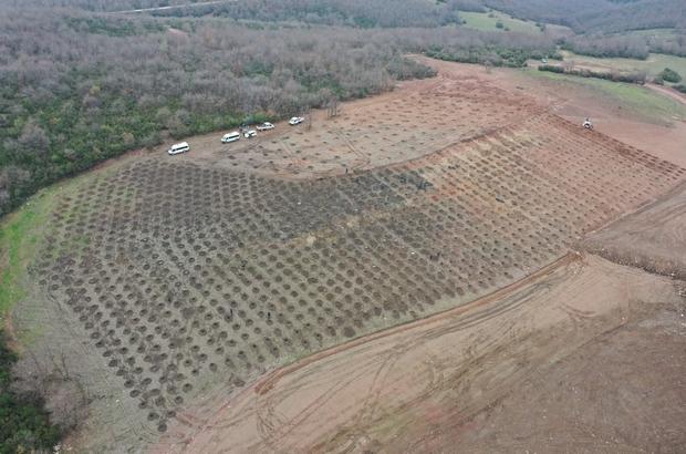 Sepetçi dolgu alanına bin 600 ağaç dikilecek