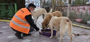 Kısıtlamada sokak hayvanları besleniyor