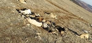 Akıl almaz olay, 29 köpek uyuşturulmuş olarak bulundu