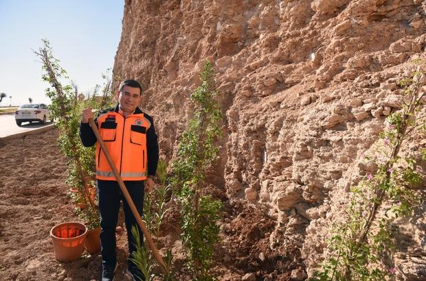 Masa Dağı'na 12 bin adet çiçek 5 kilometrelik yol ağının çevresine, 12 bin adet begonvil ile zakkum dikildi