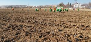 Konya'da tıbbi aromatik bitki yetişecek