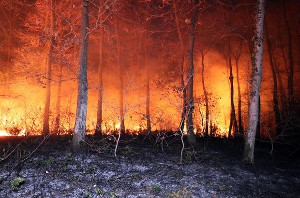"""Sakarya İl Ormanında korkutan yangın Uyuşturucu kullandığı iddia edilen kişiler yüzünden çıkan yangın paniğe neden oldu Ekipler ve vatandaşlar yangını söndürebilmek için seferber oldu Söndürme çalışmalarına yardım eden Mahalle Muhtarı Yavuz: """"Ciğerlerimizi kurtardık"""""""