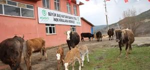 Hayvan Oteli'ne büyük ilgi Ordu'da Hayvan Oteli ve İnek Kiralama Merkezi ile Hayvancılık daha kolay hale getirildi