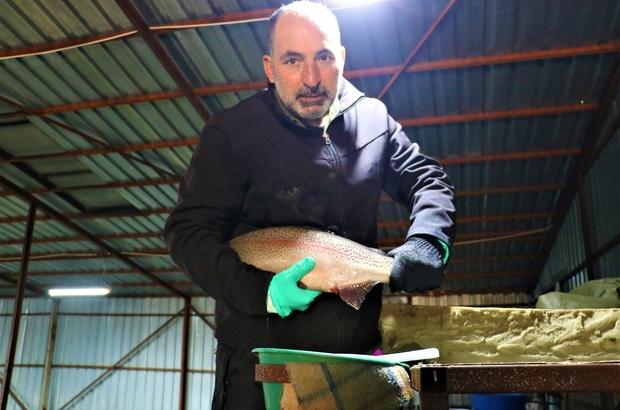 Bozkırda üretiyor, dünyaya satıyor Sivas'ın Ulaş ilçesinde bulunan Alabalık çiftliğinde üretilen 39 milyon alabalık yumurtası Suşehri ilçesinde işlendikten sonra çeşitli Avrupa ülkelerine gönderiliyor