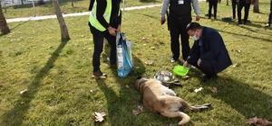 Başkan Beyoğlu, sokak hayvanlarını besledi