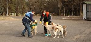 Diyarbakır Büyükşehir Belediyesi kısıtlamada sokak hayvanlarını yalnız bırakmadı