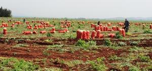 Hatay'da desteklenecek 13 ürün belli oldu Bitkisel üretim faaliyetlerinin planlanması, toprakların boşa ekilmemesi, üretilen ürünlerin elde kalmaması ve arz talep dengesizliğinin yaşanmaması için belirlenen 15 tarım havzasında 13 ürünün üretimi desteklenecek