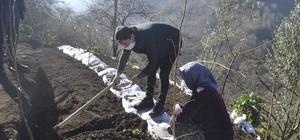 Trabzon'da ilk kez dikimi yapıldı Trabzon'da fındığa alternatif gelir kaynağı oluşturmak amacıyla Şalpazarı ilçesinde salep fidesi ekimi yapıldı