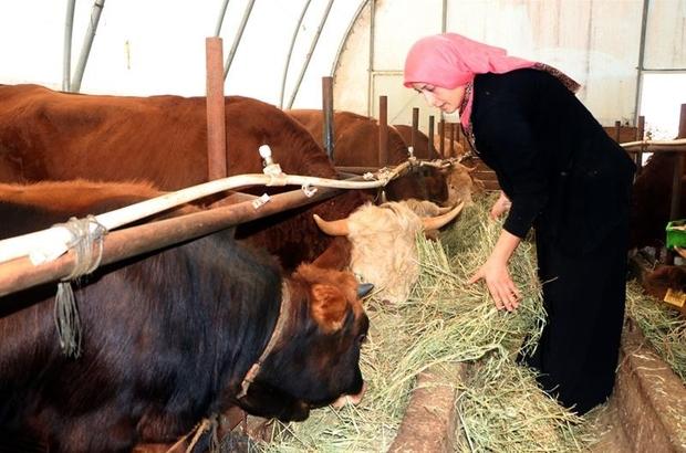 Genç çiftçi projesiyle başladı şimdi siparişlere yetişemiyor Trabzon'da 3 yıl önce hibe desteğiyle 3 büyükbaş hayvan ile besiciliğe ve süt üretimine başladı şimdi 20 büyükbaş hayvan sahibi oldu