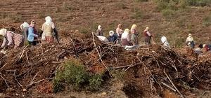 Karacasu'da 280 bin fidan toprakla buluşuyor