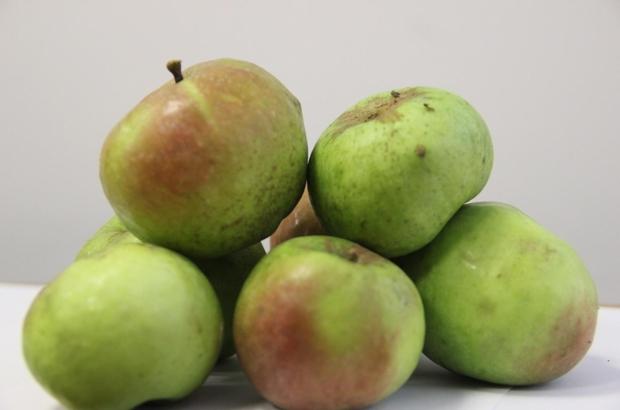 Yomra elması tescillendi