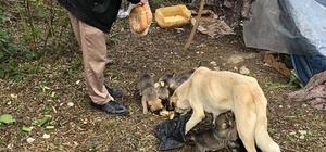 Pandemide aç kalan sokak hayvanları unutulmadı