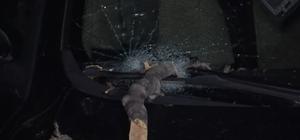 Bursa'da etkili olan lodos çınar ağacını devirdi Yarım asırlık çınar iki aracın üzerine devrildi