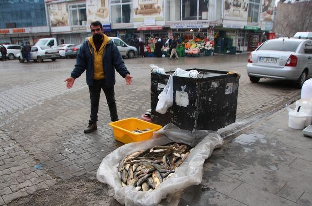 Murat Nehri'nde balık bolluğu