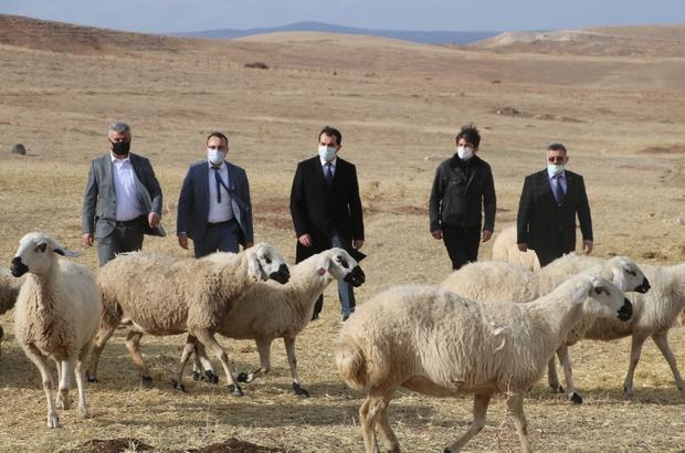 Sivas'ta küçükbaş hayvan yetiştiricileri birleşti, hedef 100 bin koyun Sivas'ın Altınyayla ilçesinde küçükbaş hayvan yetiştiricilerinin bir araya gelmesiyle kurulan dernekle ilçede koyun sayısının 100 bine çıkarılması hedefleniyor