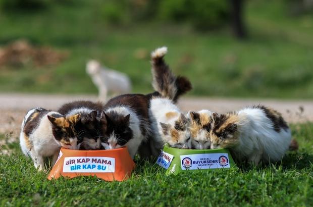 2020 yılında bin 100 sokak hayvanı sahiplendirildi Büyükşehir sokak hayvanlarının bakımını ve tedavisini gerçekleştiriyor
