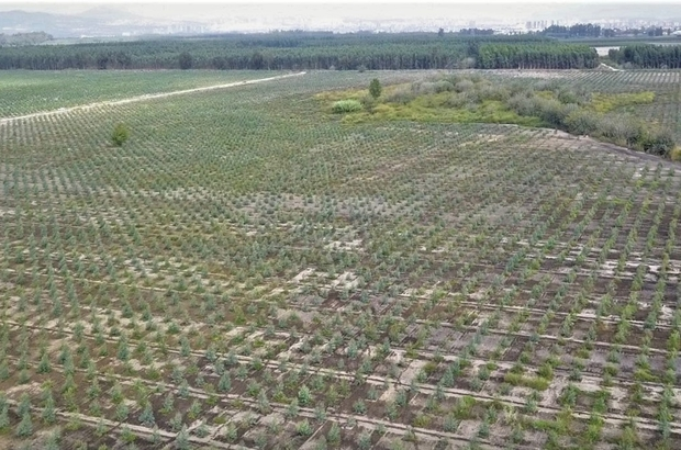Mersin'de 2020 yılında bin 200 hektar alan ağaçlandırıldı