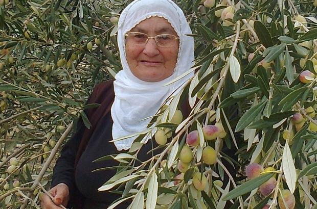 Mut'ta zeytin ve zeytinyağı hasadı sezonu sona erdi