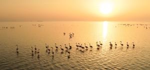 Doğa harikası lagün, hem flamingoları hem de fotoğrafseverleri ağırlıyor Flamingolar, 'Kesin Korunacak Hassas Alan' olarak tescil edilen Akyatan Lagünü'nü renklendirdi Flamingolar, güneşin doğuşuyla birlikte unutulmaz görüntüler oluşturdu Kuraklık nedeniyle lagünde sular ve kuş çeşitliliği azaldı