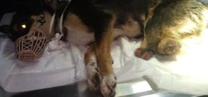 Caniler bu kez de Edirne'de ortaya çıktı 2 bacağı kesilmiş yavru köpek bulundu
