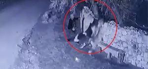 Bahçe duvarından aşırarak buzağı çalan hırsızlar güvenlik kamerasında