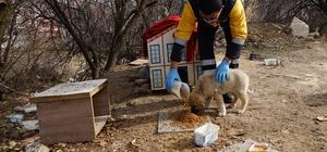 Kastamonu'da sokak hayvanları için 14 ton mama harcandı
