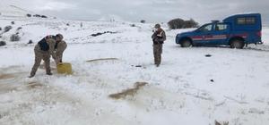Jandarma, yaban hayvanlarını unutmadı