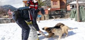 Jandarma sokak hayvanlarını unutmuyor
