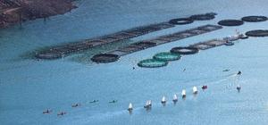 Topçam Barajı yelken ve kanolarla renklendi