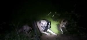 4 köpeği boğulmaktan kurtaran polis ve bekçiye ödül
