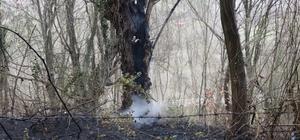 Samsun'da ormanlık alanda yangın