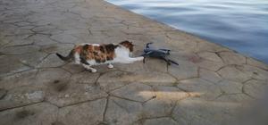 Martı zannettiği droneyi yere konunca böyle avlamaya çalıştı