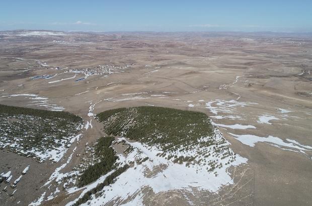 Erozyonu önlemek için yapılmıştı, bugün ortaya bu manzara çıktı Sivas'ın Ulaş ilçesi Yazıcık köyü sakinlerinin desteğiyle erozyonu önlemek için dikilen fidanlar büyüyüp ormana dönüşünce ortaya ilginç bir manzara çıktı
