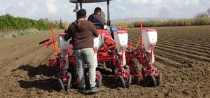 Mısır tohumları toprakla buluştu Adana'da mısır üretimi yeniden yükselişe geçti
