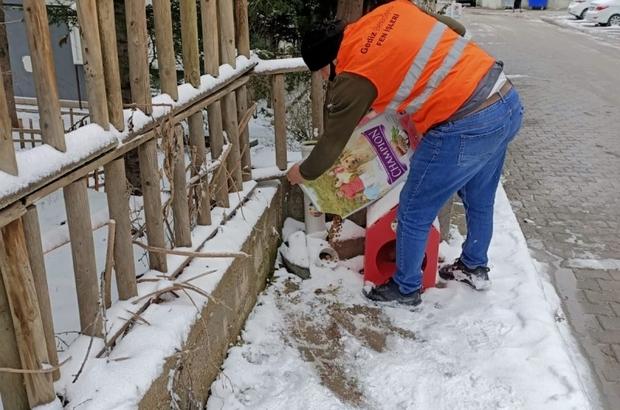 Gediz Belediyesi soğuk günlerde sokak hayvanlarını unutmadı